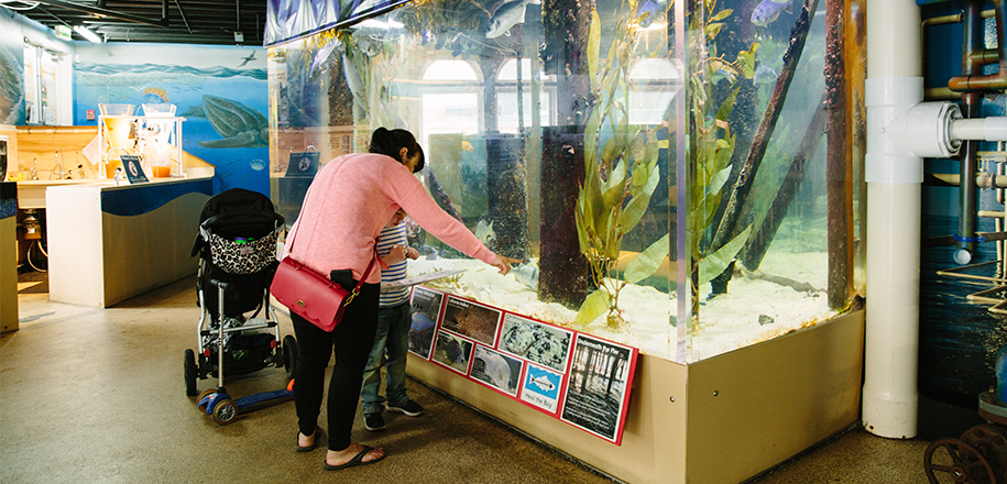 Heal the Bay Aquarium with parent and child looking at fish