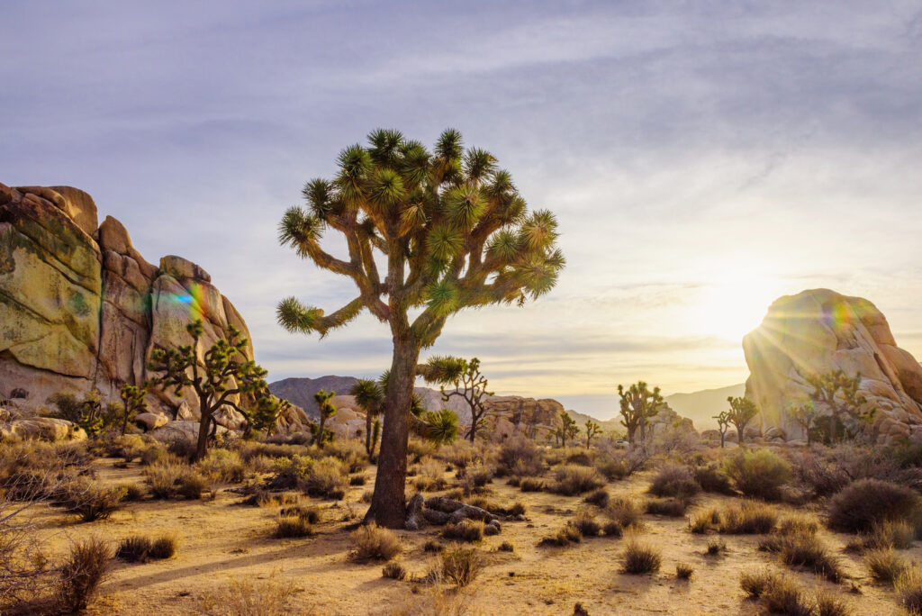 Scenic site in the Joshua Tree National Park in Greater Palm Springs